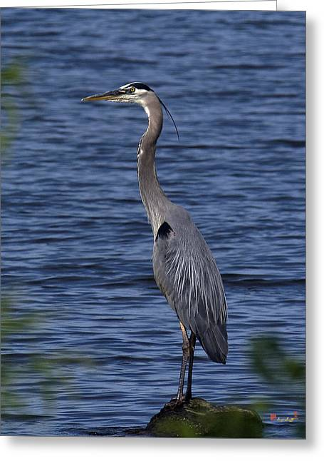 Great Blue Heron Dmsb0001 Greeting Card