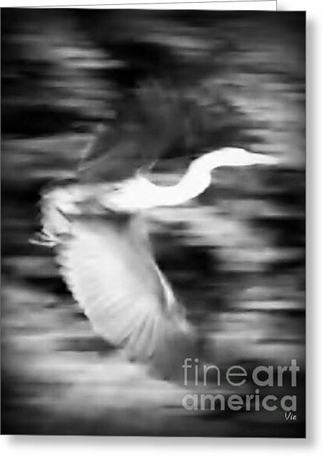 Great Blue Heron In Black And White Greeting Card