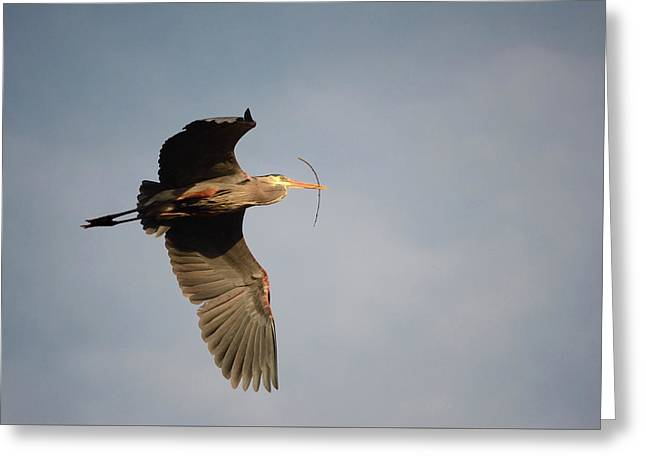 Greeting Card featuring the photograph Great Blue Heron In Flight by Ann Bridges