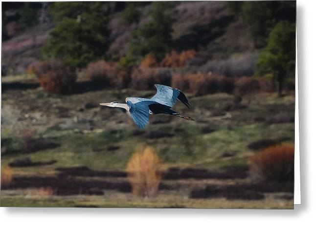 Greeting Card featuring the photograph Great Blue Heron In Flight II by Jason Coward