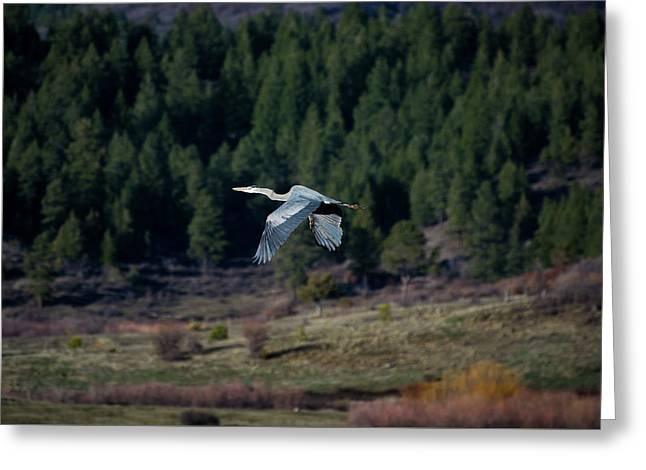 Greeting Card featuring the photograph Great Blue Heron In Flight by Jason Coward