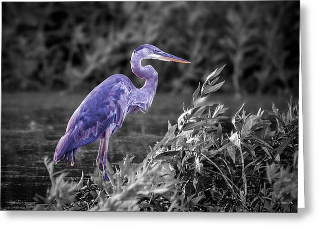 Great Blue Heron In Marsh - Color Select Greeting Card