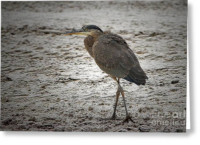 Great Blue Heron In The Snow Greeting Card by Sharon Talson