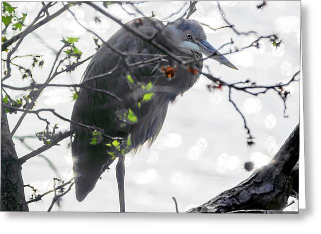 Great Blue Heron In Tree Greeting Card