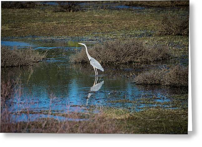Greeting Card featuring the photograph Great Blue Heron by Jason Coward
