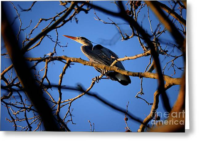 Greeting Card featuring the photograph Great Blue Heron Nesting 2017 - 2 by Terry Elniski