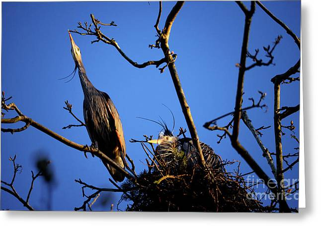 Greeting Card featuring the photograph Great Blue Heron Nesting 2017 - 5 by Terry Elniski