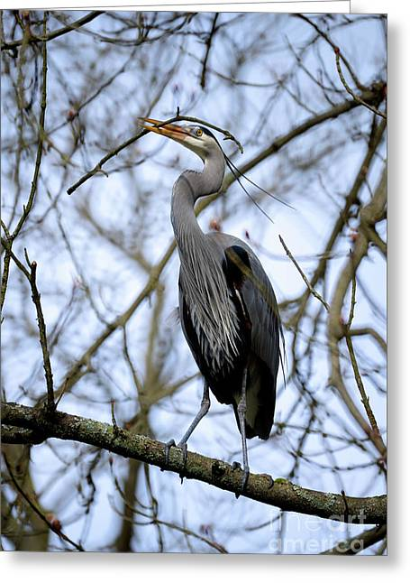 Greeting Card featuring the photograph Great Blue Heron Nesting 2017 - 6 by Terry Elniski