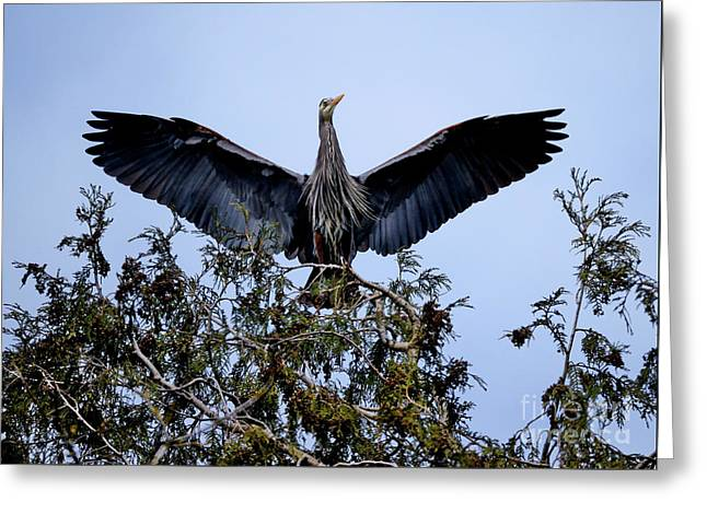 Greeting Card featuring the photograph Great Blue Heron Nesting 2017 - 7 by Terry Elniski