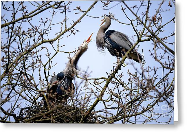Greeting Card featuring the photograph Great Blue Heron Nesting 2017 - 8 by Terry Elniski