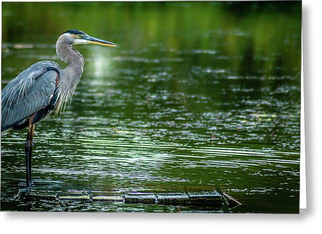 Great Blue Heron Greeting Card by Optical Playground By MP Ray