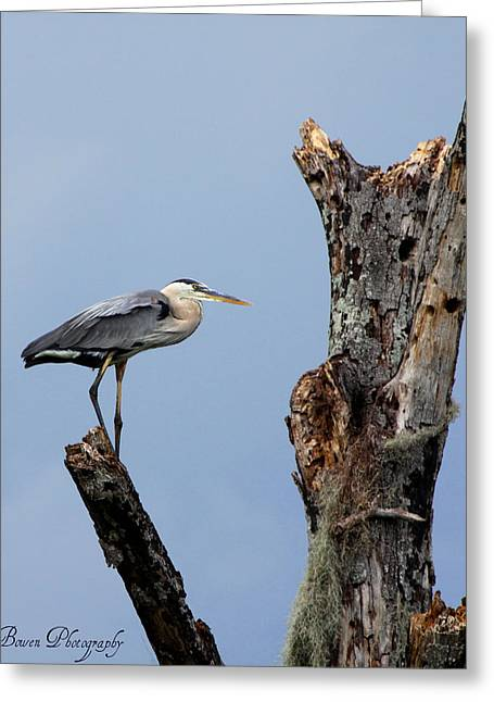 Great Blue Heron Perched Greeting Card by Barbara Bowen