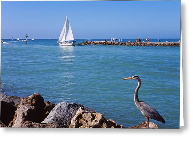 Great Blue Heron Perching On A Rocks Greeting Card by Panoramic Images