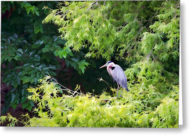 Great Blue Heron Greeting Card by Peter Tellone
