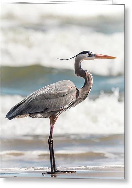 Great Blue Heron Profile Greeting Card