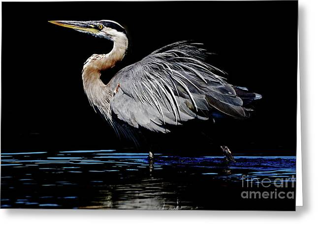 Great Blue Heron Show Off Greeting Card