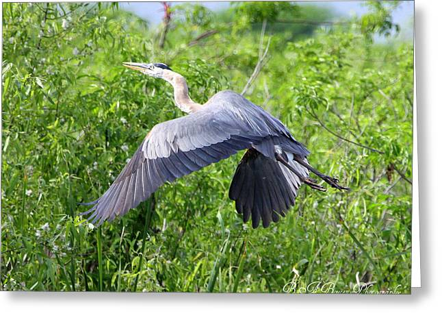 Greeting Card featuring the photograph Great Blue Heron Takeoff by Barbara Bowen