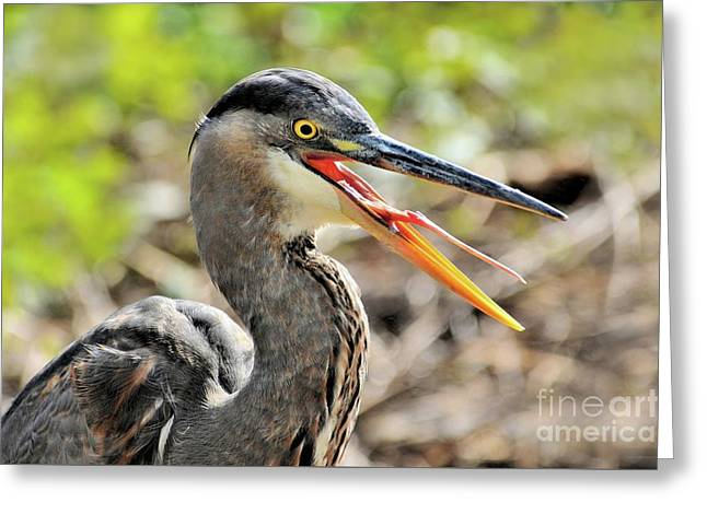 Great Blue Heron Tongue Greeting Card