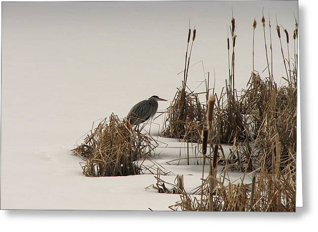 Great Blue In White Greeting Card by Athena Ellis