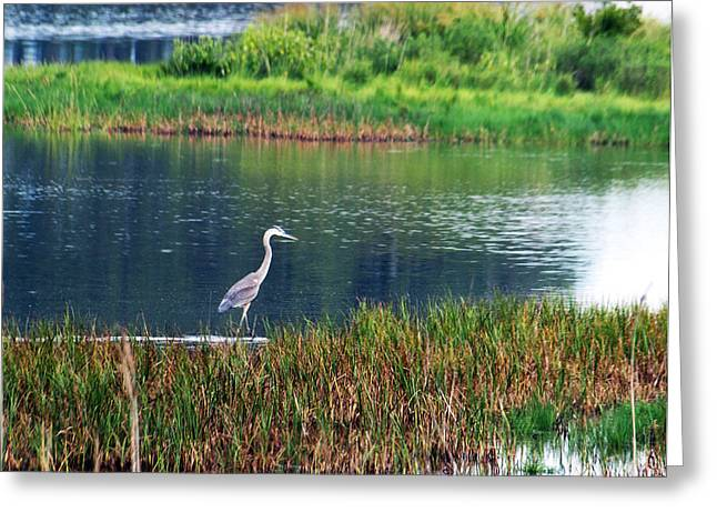 Great Blue Greeting Card by Kim