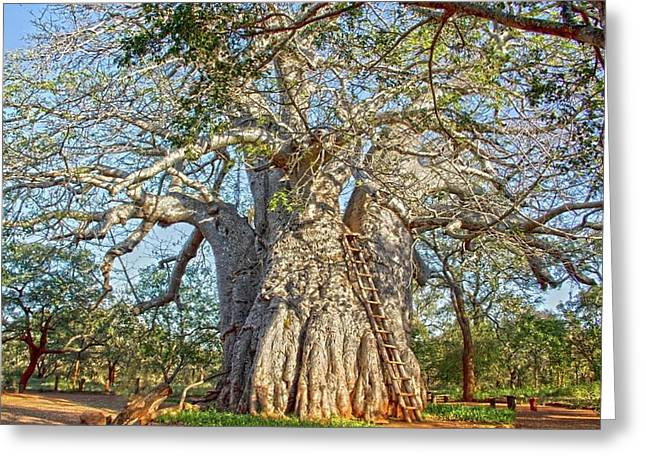 Great Boabab Tree Greeting Card by Taschja Hattingh