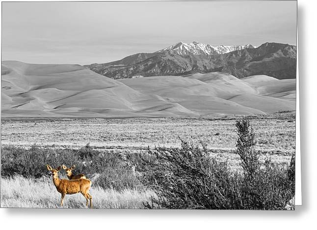 Great Colorado Sand Dunes Deer Greeting Card