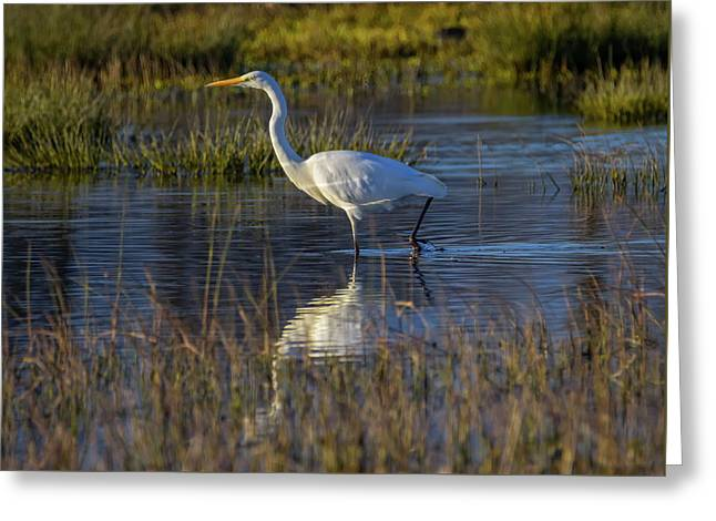 Great Egret, Ardea Alba, In A Pond Greeting Card
