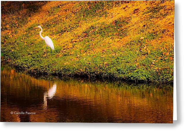 Great Egret At The Lake Greeting Card
