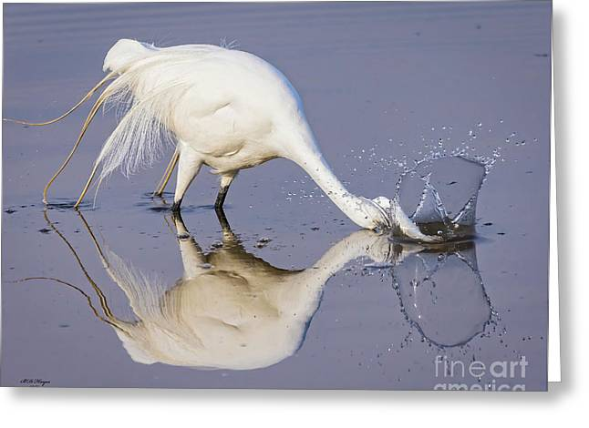 Great Egret Dipping For Food Greeting Card