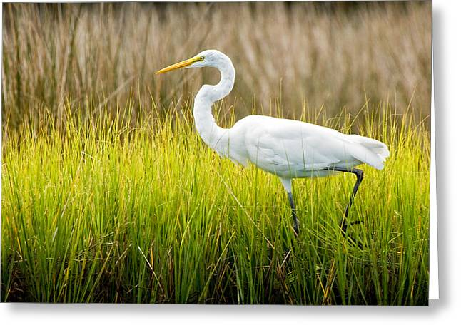 Greeting Card featuring the photograph Great Egret In Cedar Point Marsh by Bob Decker