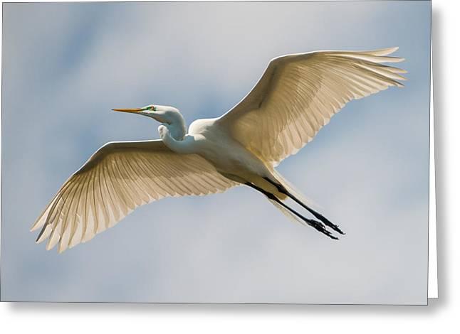Great Egret In Flight - St. Augustine Fl Greeting Card