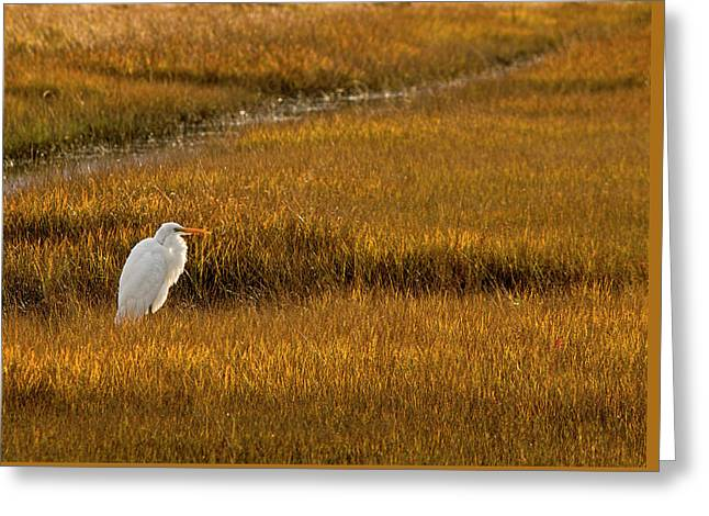 Great Egret In Morning Light Greeting Card