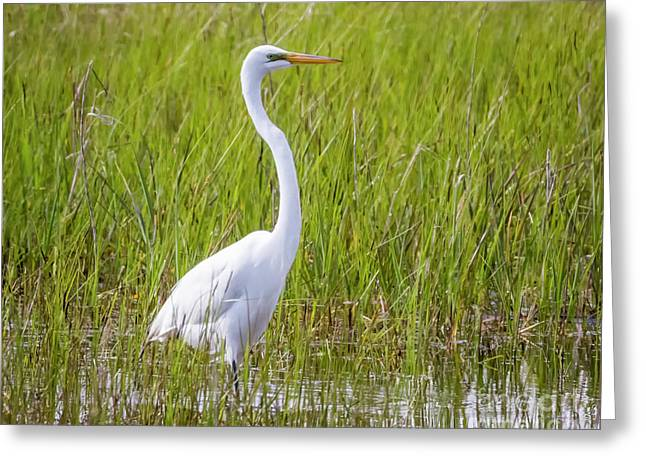 Greeting Card featuring the photograph Great Egret In The Spring  by Ricky L Jones
