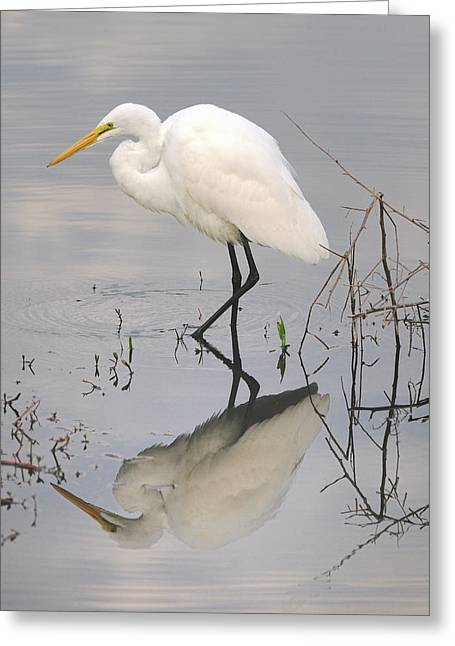 Great Egret Reflected Greeting Card by Brian Grant