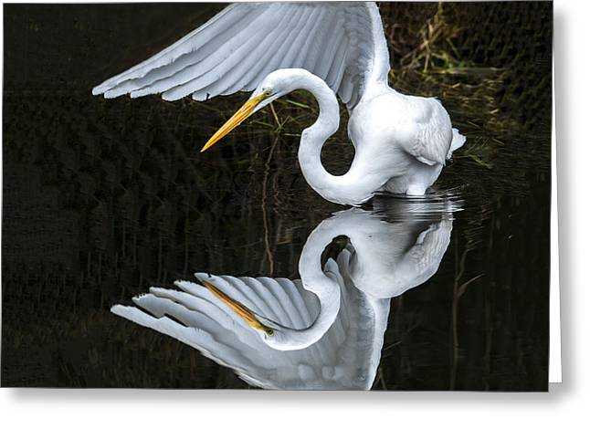 Great Egret Reflection Greeting Card
