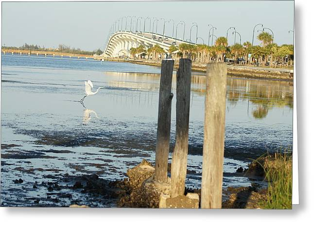 Greeting Card featuring the photograph Great Egret Takes Flight by Lynda Dawson-Youngclaus