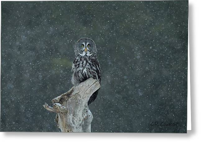 Great Gray Owl In Snowstorm Greeting Card