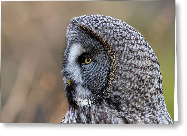 Great Grey's Profile A Closeup Greeting Card by Torbjorn Swenelius