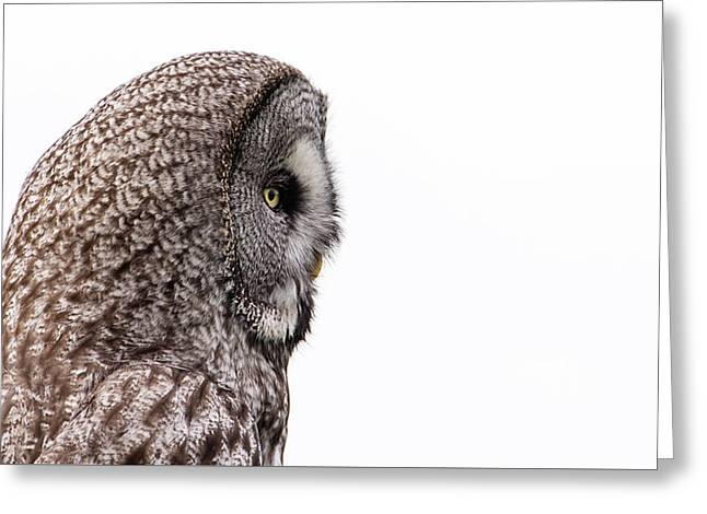 Great Grey's Profile On White Greeting Card