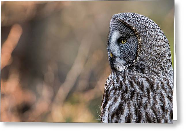 Great Grey's Profile Greeting Card by Torbjorn Swenelius