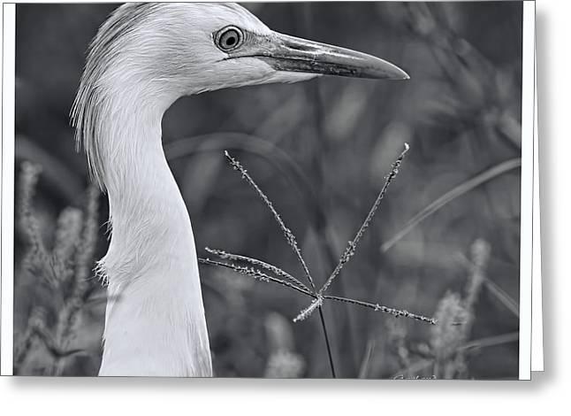 Great Heron 2 Greeting Card
