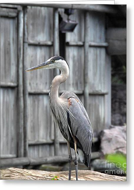 Greeting Card featuring the photograph Great Heron by John Black