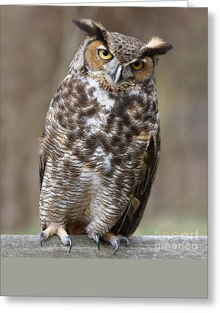 Greeting Card featuring the photograph Great Horned Owl 3 by Chris Scroggins