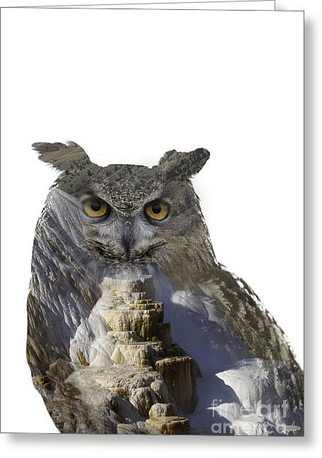 Great Horned Owl And Mammoth Hot Springs Greeting Card
