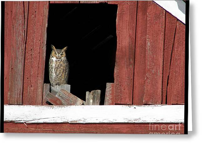 Greeting Card featuring the photograph Great Horned Owl by Daniel Hebard