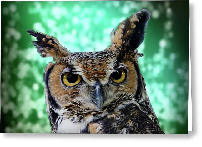 Great Horned Owl Face Greeting Card