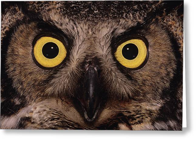 Great Horned Owl Face Greeting Card by Tony Beck