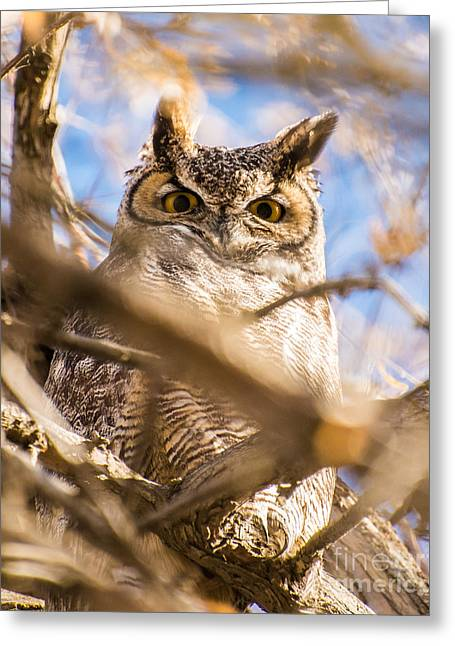 Great Horned Owl - Fielding Garr Ranch Greeting Card by Gary Whitton