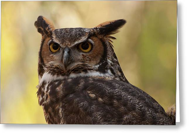 Great Horned Owl In A Tree 1 Greeting Card by Chris Flees