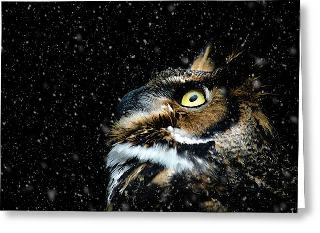 Great Horned Owl In The Snow Greeting Card by Tracy Munson